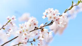 青空に枝を伸ばす桜