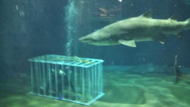 大洗アクアワールドのサメの水槽